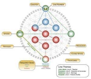 Cheile Genelor - profil hologenetic